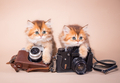 British shorthair cat with camera - PhotoDune Item for Sale