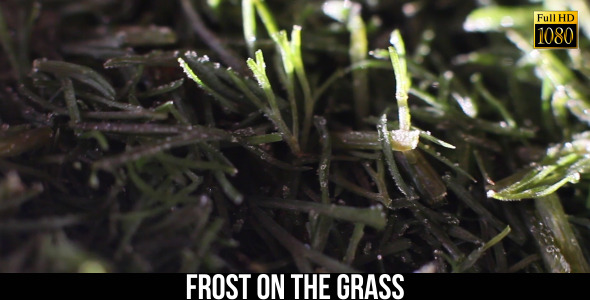 Frost On The Grass 2