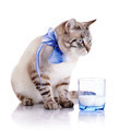 Striped cat with a blue bow and a glass of milk. - PhotoDune Item for Sale