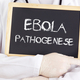 Doctor shows information: Ebola pathogenesis in german - PhotoDune Item for Sale