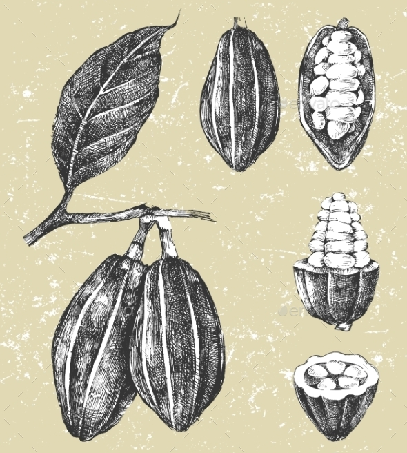 GraphicRiver Hand Drawn Cocoa Beans Set 9177614