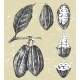 Hand Drawn Cocoa Beans Set - GraphicRiver Item for Sale