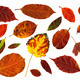 Collection of autumn leaves isolated on white - PhotoDune Item for Sale