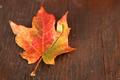 Dried Autumn leaf on wood - PhotoDune Item for Sale