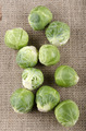 brussels sprouts on a jute cloth - PhotoDune Item for Sale