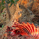 Feeding leopard - PhotoDune Item for Sale