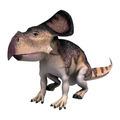 Dinosaur Protoceratops  - PhotoDune Item for Sale
