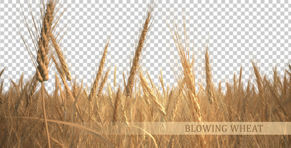 [VideoHive 938085] Blowing Wheat | Motion Graphics