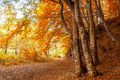 Forest road covered with leaves in autumn - PhotoDune Item for Sale