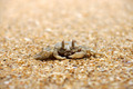 Crab on the beach - PhotoDune Item for Sale