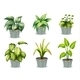 Six Leafy Plants with Pot - GraphicRiver Item for Sale