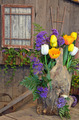 Colorful tulip display - PhotoDune Item for Sale