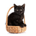 Black kitten in a wattled basket. - PhotoDune Item for Sale