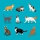 Set of Vector Cats - GraphicRiver Item for Sale