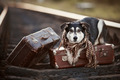 The dog lies on suitcases on rails - PhotoDune Item for Sale