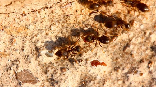 Ants On Stone