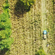 Agriculture - Flying Over the Cornfield - VideoHive Item for Sale