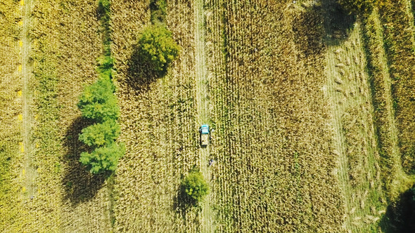Agriculture Flying Over the Cornfield