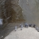 Pigeons Drinking Water from the River 02 - VideoHive Item for Sale