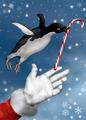 Christmas Penguin - PhotoDune Item for Sale
