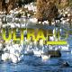Ducks in River 1 - VideoHive Item for Sale