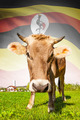 Cow with flag on background series - Uganda - PhotoDune Item for Sale