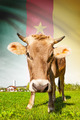Cow with flag on background series - Cameroon - PhotoDune Item for Sale