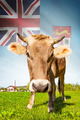 Cow with flag on background series - Fiji - PhotoDune Item for Sale