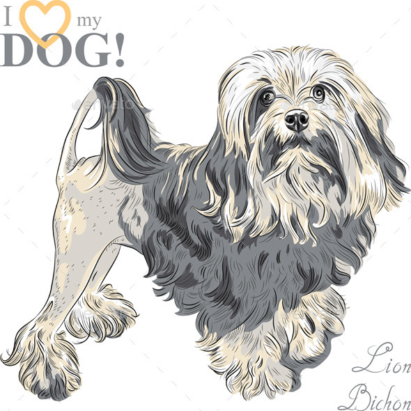 GraphicRiver Vector Dog Breed Lowchen 9205512
