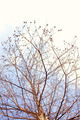 Naked branches of a tree against - PhotoDune Item for Sale