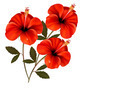 Three red flowers background.  - PhotoDune Item for Sale