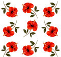 Pattern of beautiful red flowers - PhotoDune Item for Sale