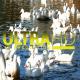 Ducks in River 3 - VideoHive Item for Sale