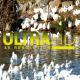 Ducks in River 4 - VideoHive Item for Sale