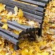 Wooden bench in autumn park - PhotoDune Item for Sale