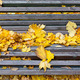 Bench in autumn park with fallen leaves - PhotoDune Item for Sale