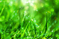 Fresh grass with dew drops in the morning. - PhotoDune Item for Sale