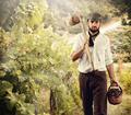 Winegrower while harvest grapes - PhotoDune Item for Sale