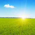 beautiful sunrise over wheat field - PhotoDune Item for Sale