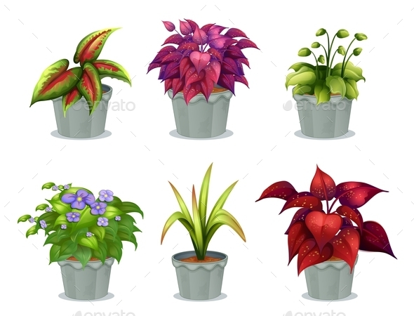GraphicRiver Six Different Plants 9224604