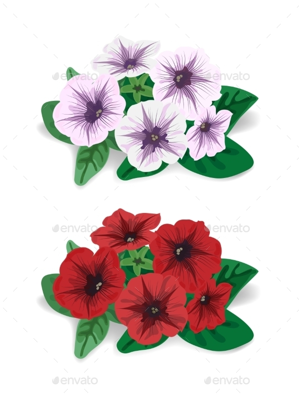 GraphicRiver Petunia Flower 9224652