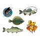Salmon, Flounder, Perch and Goldfish - GraphicRiver Item for Sale