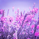view the sky through the green grass with pink flowers  - PhotoDune Item for Sale