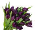 Bouquet of tulips - PhotoDune Item for Sale