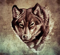 Sketch of tattoo art, Illustration of a Wolf head - PhotoDune Item for Sale