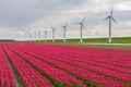 Dutch tulip field with a long row of wind turbines - PhotoDune Item for Sale