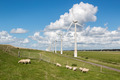 Dutch pasture with sheep and windturbines with a beautiful late summer cloudsky - PhotoDune Item for Sale