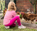 Little girl feeding hens - PhotoDune Item for Sale