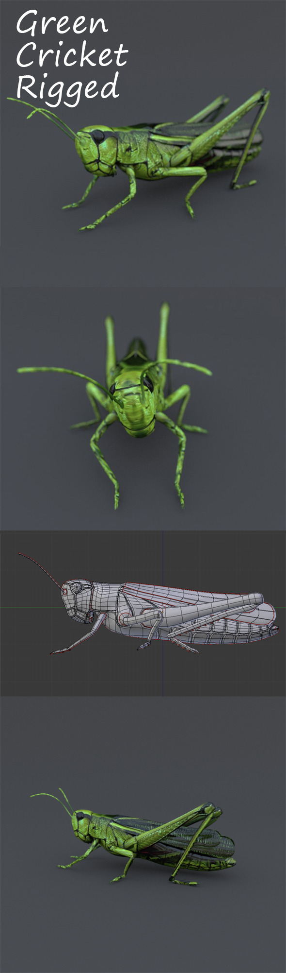 Green Cricket - 3DOcean Item for Sale