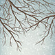 Winter Vector Tree Branches - GraphicRiver Item for Sale